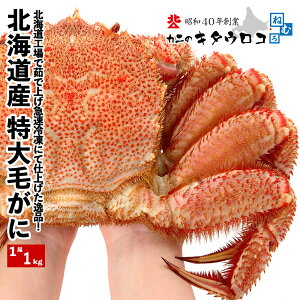 北海道産 特大 毛がに1kg前後×1尾入 送料無料お取り寄せ 毛ガニ 毛蟹 かに カニ 蟹 バーベキューセット BBQ ka1