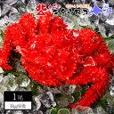 【送料無料】カニのキタウロコ 花咲がに 姿 ボイル 1kg前後 1尾入 かに カニ 蟹 花咲ガニ ギフト 高級 記念日 誕生日 …