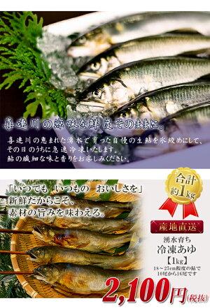 冷凍鮎1kg栃木県喜連川湧水育ち鮎小分け魚焼き魚焼魚川魚バーベキュー