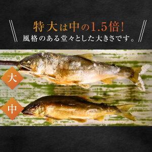 鮎の塩焼き鮎の炭火焼喜連川湧水育ち鮎5尾入り特大サイズあゆアユバーベキュー