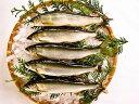 今が旬!湧水育ち天然仕立て生鮎1Kg【バーベキュー 海鮮 食材 セット 魚 鮎の塩焼き 旬 BBQ】05P05Nov16
