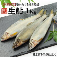生鮎1Kg湧水育ち鮎天然仕立てバーベキュー食材セット魚鮎の塩焼き旬BBQ