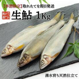 生鮎 1Kg 湧水育ち 鮎 天然仕立て バーベキュー 食材セット 魚 鮎の塩焼き 旬