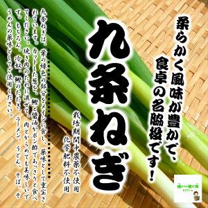 九条ねぎ 栽培期間中農薬不使用・化学肥料不使用 埼玉県産 1束約150g ※農薬を使用していないので虫食いが少しあります。 ※配送箱によって、ねぎの緑の部分が折り曲げてある場合