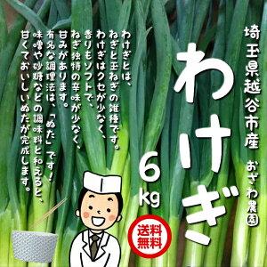 【送料無料】わけぎ 6kg(200g×30束) 埼玉県越谷市産 おざわ農園