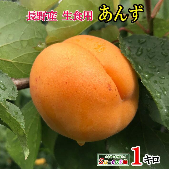 【ご予約受付中】 長野県産 生食用 あんず ハーコット 1キロ