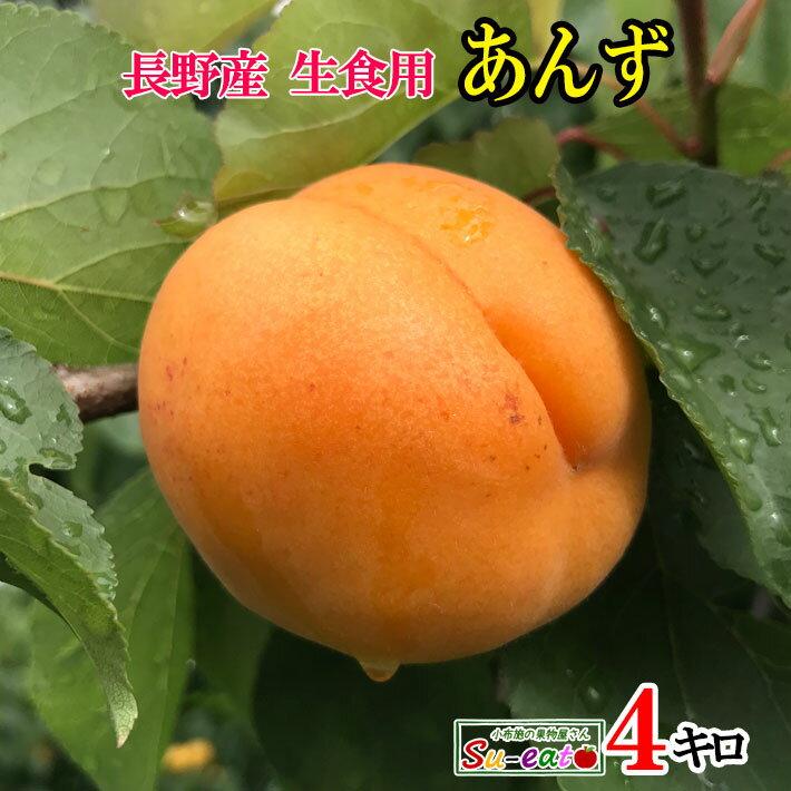 【ご予約受付中】 長野県産 生食用 あんず ハーコット 4キロ