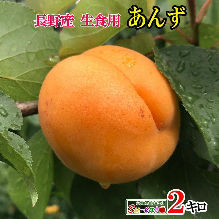 【ご予約受付中】 長野県産 生食用 あんず ハーコット 2キロ