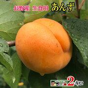 長野県産生食用あんずハーコット2キロ