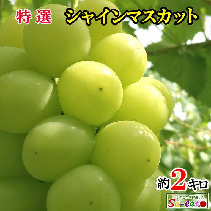 送料無料 訳あり 完熟 味極み ぶどう シャインマスカット 長野県産 小布施 産地直送 2キロ