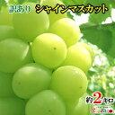 訳あり 完熟 ぶどう シャインマスカット 長野県産 産地直送 約2キロ