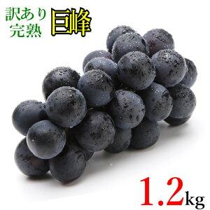 10月上旬発送 巨峰 種なし 訳あり ぶどう 長野県産 1.2キロ レビューを書いたら200円クーポン