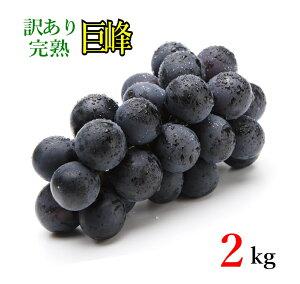 10月上旬発送 巨峰 訳あり 種なし ぶどう 長野県産 2キロ レビューを書いたら200円クーポン