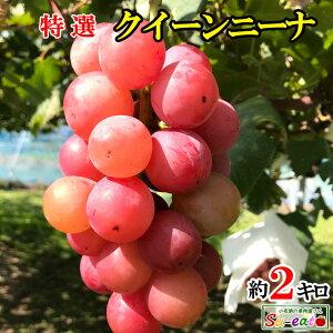 10月中旬発送 特選 クイーンニーナ 種なし ぶどう 長野県産  2キロ レビューを書いたら200円クーポン