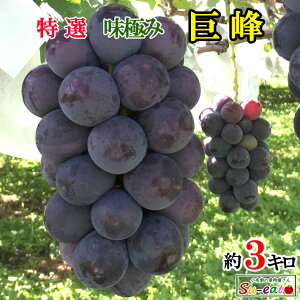 9月上旬発送 特選 巨峰 種なし ぶどう 長野県産 3キロ レビューを書いたら200円クーポン