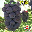 訳あり 種なし 完熟 巨峰 ぶどう 長野県産 約2キロ