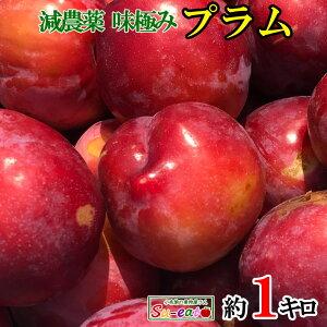 冷凍 シャーベット プラム すもも    長野県産  1キロ ※解凍NG