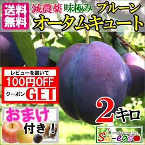 9月中旬発送 高級 生プルーン オータムキュート 減農薬 長野県産  2キロ
