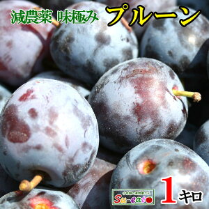8月下旬発送 大玉くらしま 生プルーン 減農薬 長野県産 1キロ レビューを書いたら200円クーポン