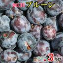 ご予約受付中 加工用 生 プルーン 減農薬 長野県産 3キロ 生食には向きません