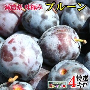 7月下旬発送 特選  生プルーン 減農薬 長野県産 4キロ レビューを書いたら200円クーポン