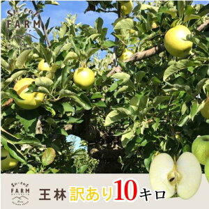 10月下旬発送 王林 訳あり りんご 減農薬 長野県産 10キロ レビューを書いたら200円クーポン