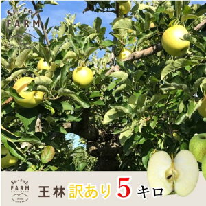 10月下旬発送 王林 訳あり りんご 減農薬 長野県産 5キロ レビューを書いたら200円クーポン