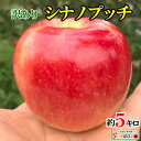9月中旬発送 訳あり 葉とらず 味極み りんご シナノプッチ 減農薬 長野県産 約5キロ