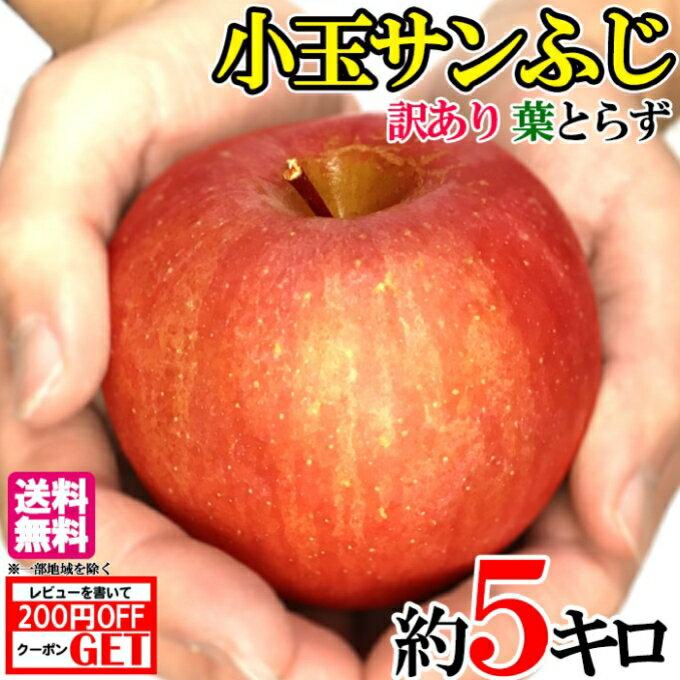 送料無料 訳あり 小玉サンふじ りんご 減農薬 長野県産 約5キロ