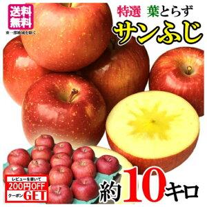 11月下旬発送 特選 サンふじ りんご 減農薬 長野県産 10キロ