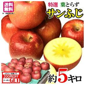 贈答 サンふじ りんご 減農薬 長野県産 5キロ