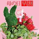 母の日 プレゼント 花 カーネーション & くまとうさぎで選べる トピアリーモス セット ギフト ボックス入り 送料無料 母の日プレゼン…