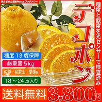 店長激オシ!!柑橘の1番人気「デコポン」5kg