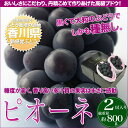 お中元 ギフト 香川産 ぶどう ピオーネ 2房(総重量800g)黒くて大粒!種無しのぶどうです。 お中元果物ギフト フルーツギフト