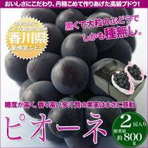 【送料無料】黒くて大粒!種無し高級ぶどう「ピオーネ(ニューピオーネ)」2kg