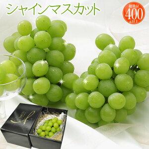 お中元 フルーツ ギフト 山梨産 ぶどう シャインマスカット 1房 種無しで皮ごと食べられる今注目の葡萄、シャインマスカットです。 果物 フルーツギフト お盆のお供えにも