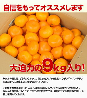 【店長激オシ送料無料!みかんシーズンの最後を飾るどこか懐かしい味わい和歌山県産蔵出しみかん9kg