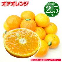 【送料無料】イスラエルから初上陸!本気でうまい新柑橘「オアオレンジ(オラオレンジ)」