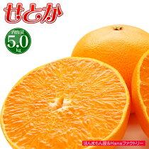 送料無料せとか総重量約5kg幻の柑橘