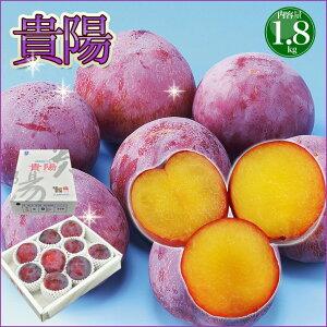 お中元 フルーツ ギフト 送料無料 高級すもも 貴陽 約1.8kg 大玉でとても甘くてジューシー プラム スモモ 李 御中元 果物 フルーツギフト
