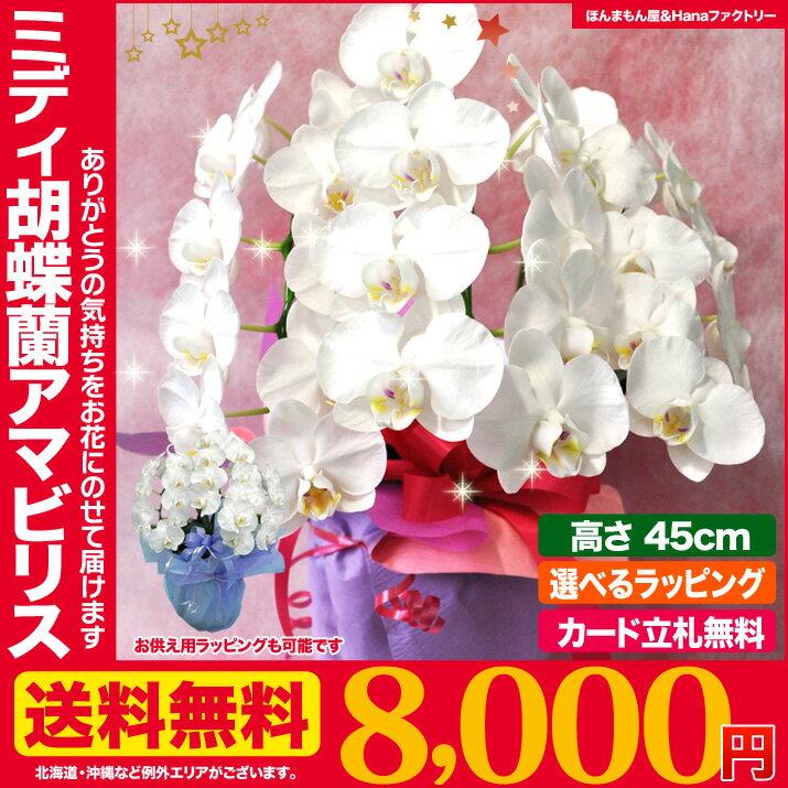 送料無料 フラワーギフト ミニ 胡蝶蘭 アマビリス 3本立ち お祝い お供え ラッピング 無料 花 プレゼント