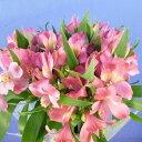 アルストロメリア 5本 切花 生花 切り花 長野県産 造花ではありません お色おまかせ