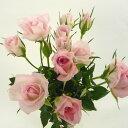 スプレーバラ Sバラ スプレー薔薇 ばら 5本 切花 生花 切り花 造花ではありません お色おまかせ