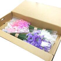 スイートピー切花生花切り花100本箱売り造花ではありませんお色おまかせ