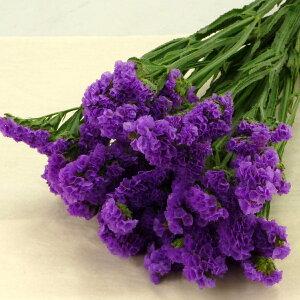 スターチス チース リモニウム 切花 生花 切り花 5本 造花ではありません お色おまかせ