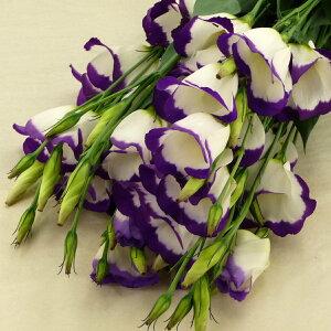 トルコキキョウ トルコ桔梗 ユーストマ 切花 生花 切り花 5本 長野県産 造花ではありません お色おまかせ