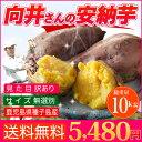 【訳あり】【送料無料】鹿児島県 種子島 さつまいも 安納芋 訳あり 無選別 10kg 焼き芋 はもちろん干し芋にも! 【さ…