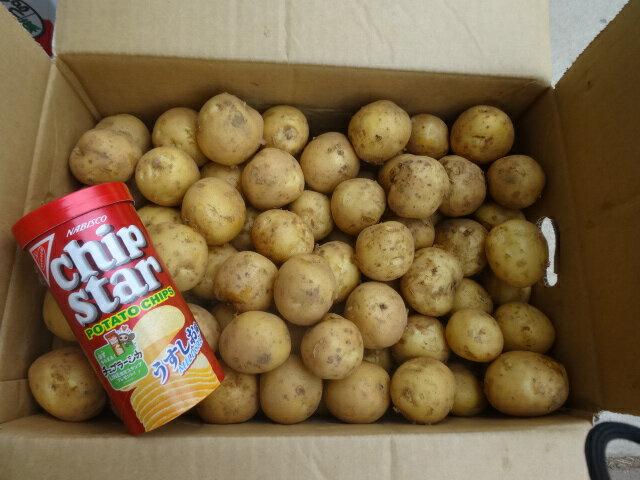 北海道産じゃが芋小サイズ10kg 送料無料※沖縄地区は除く