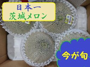 茨城産『旬のメロン』1箱5kg