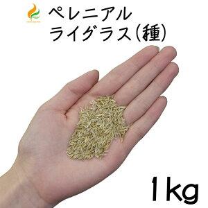 ペレニアルライグラス【種】1kg